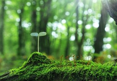 欧盟修订植物油脂等的大限量标准
